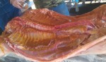 Big Pig Jig Whole Hog 04