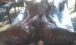 Big Pig Jig Whole Hog 09