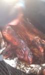 Big Pig Jig Whole Hog 15